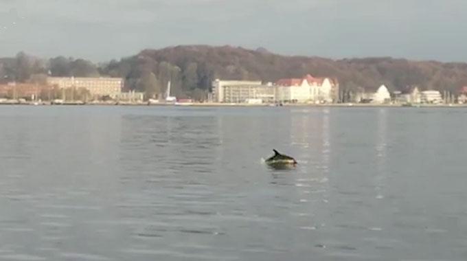 Delfin Freddy