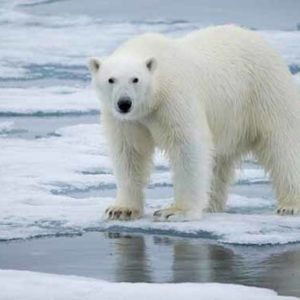 Rekordwärme auf Spitzbergen